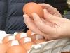 [사진] 식약처장, 설 명절 앞두고 대형마트서 달걀 신선도 살펴