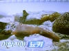 생활의 달인, 뇨끼·파스타 달인...파스닙과 펜넬 숙성 닭날개 육수 비법
