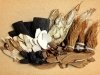코로나19 대비 면역 증진과 호흡기질환에 좋은 12가지 약용식물