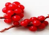 오미자·맥문동 감초·도라지 궁합, 환절기 호흡기 건강 도움